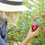 zbieranie owocow